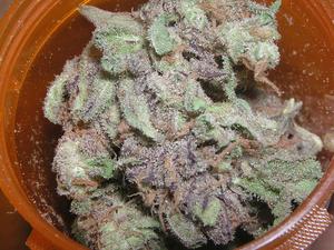 800px-Purple_Goo.png