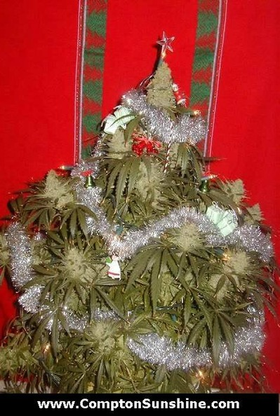 Funny-MarijuanaChristmasTree-www.jpg
