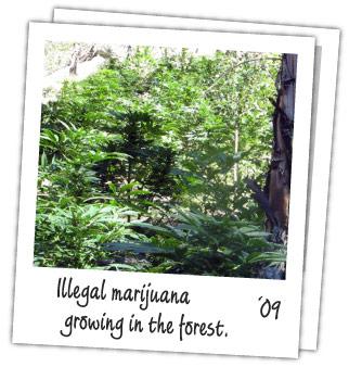 illegal-marijuana-garden-polaroid.jpg