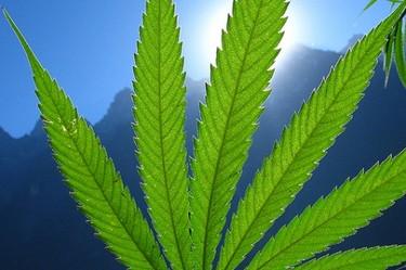 marijuana-470x313.jpeg
