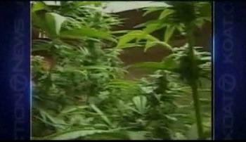 KOAT-TV New Mexico Medical Marijuana.jpg