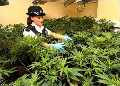 _42128524_cannabis_pa416 flip.jpg