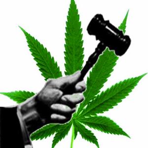 5161-JudgeMarijuana flip.jpg