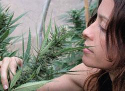 alanis-morissette-weed.jpeg