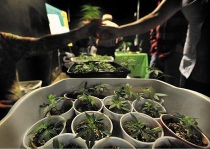 medical marijuana patient exchanges.jpg