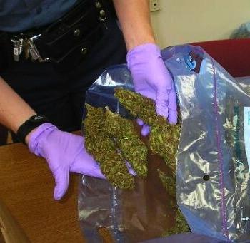 marijuana_bust_osp_71606 flip.jpg