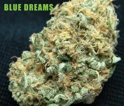 Blue-Dreams-Sept10-copy-725x618.jpeg