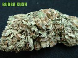 Bubba-Kush-Sept-10-copy-725x543.jpeg