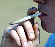 cannabisPA260606_228x196.jpeg
