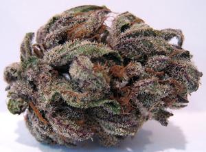 purple_bubba_july.jpeg