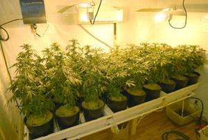 Grow_Room_Plants.jpeg