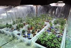 large_JNS.MarijuanaRaid2.jpeg