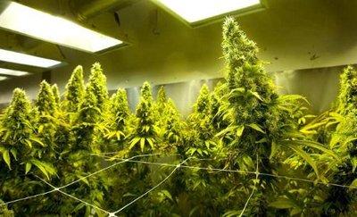 this_pot_farm_is_legal.jpeg