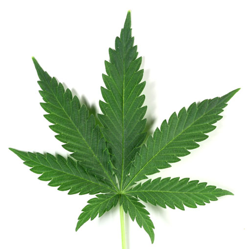 marijuana-leaf sized.jpg