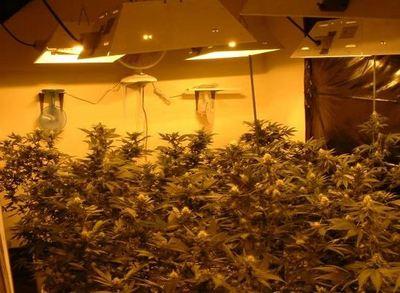 marijuana grow dea-thumb-550x404.jpeg