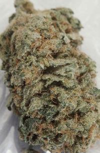 AK-47-marijuana-260917_500_766.jpg