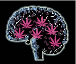 Effects-of-Cannabis.jpeg