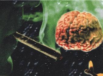 Thumbnail image for brain1 flip.jpg