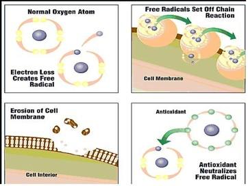 normal oxygen atom.jpg