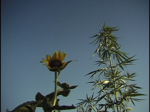 plant_still.jpg