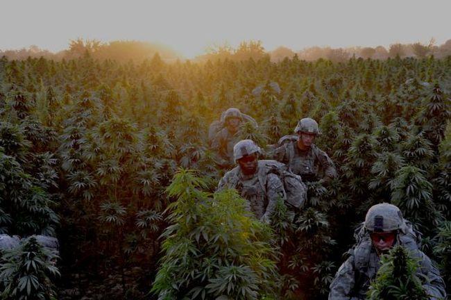 afghanistan-10-25-10-marijuana-field.jpeg