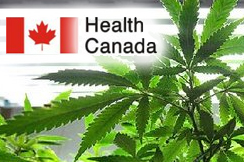 health canada marihuana application forms