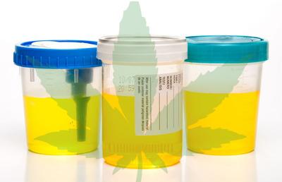 urineTestPissCupsMarijuana.jpeg