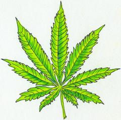 marijuana-cclark.jpeg