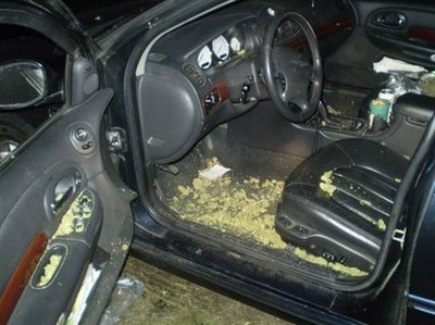 weed_out_car.jpeg