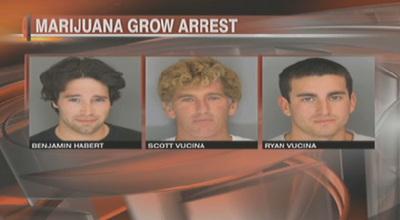 MarijuanaGrowArrests.jpg