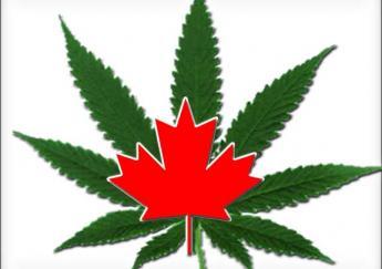 canada-marijuana-1.jpeg