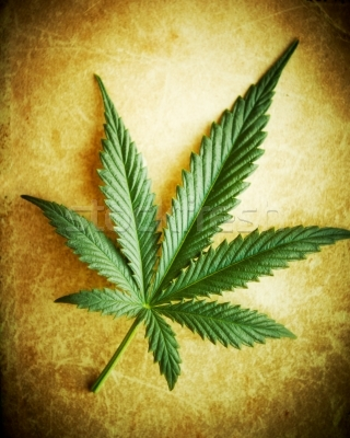 180760_stock-photo-cannabis-leaf-on-grunge-background-shallow-dof.jpeg