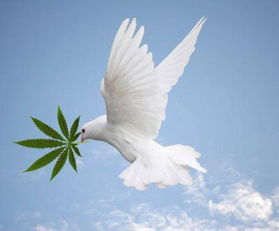 Dove_with_cannabis.jpeg