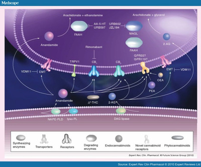 MedscapeEndocannabinoids.jpg