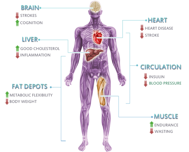 a review of the effects of marijuana on the human body Please review the contents of the catechins have an affinity for human cannabinoid endocannabinoids are substances produced from within the body that activate.