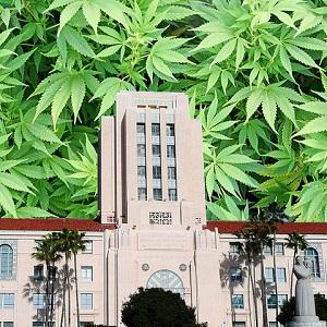 San-Diego-Marijuana300.jpeg