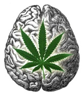 brain-marijuana-thc.jpeg