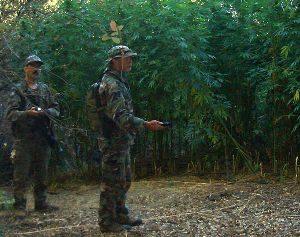marijuana-eradication-1.jpeg