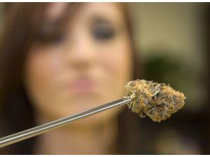 marijuana-business-license.jpeg