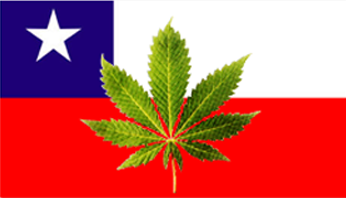 marijuana-chile.png