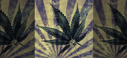 blog_marijuana.jpeg