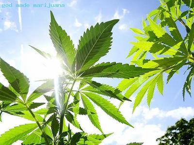 god-made-marijuana.jpeg