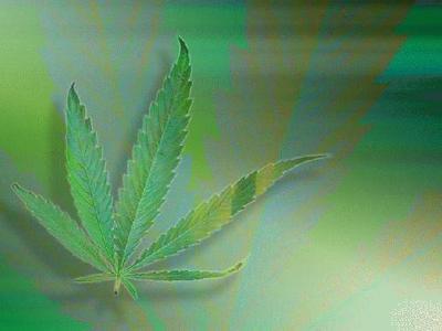 marijuana_ilBqQ.jpeg