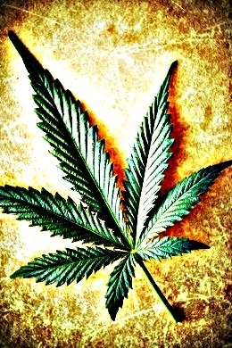 Marijuana-leaf-1-11-5-121.jpeg