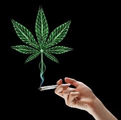 marijuana-small.jpeg