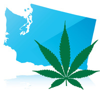 Thumbnail image for washingtonmarijuana.jpg