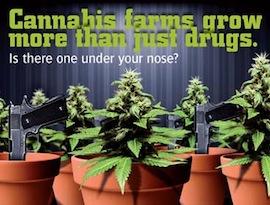 Cannabis Online Image_368.jpg