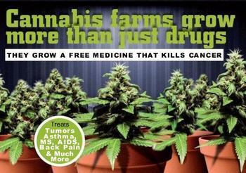 NORML UKcannabis_farms1.jpg
