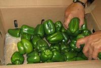 bell peppers on weed.jpg