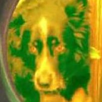 marijuana dog stoned 205x205.jpg
